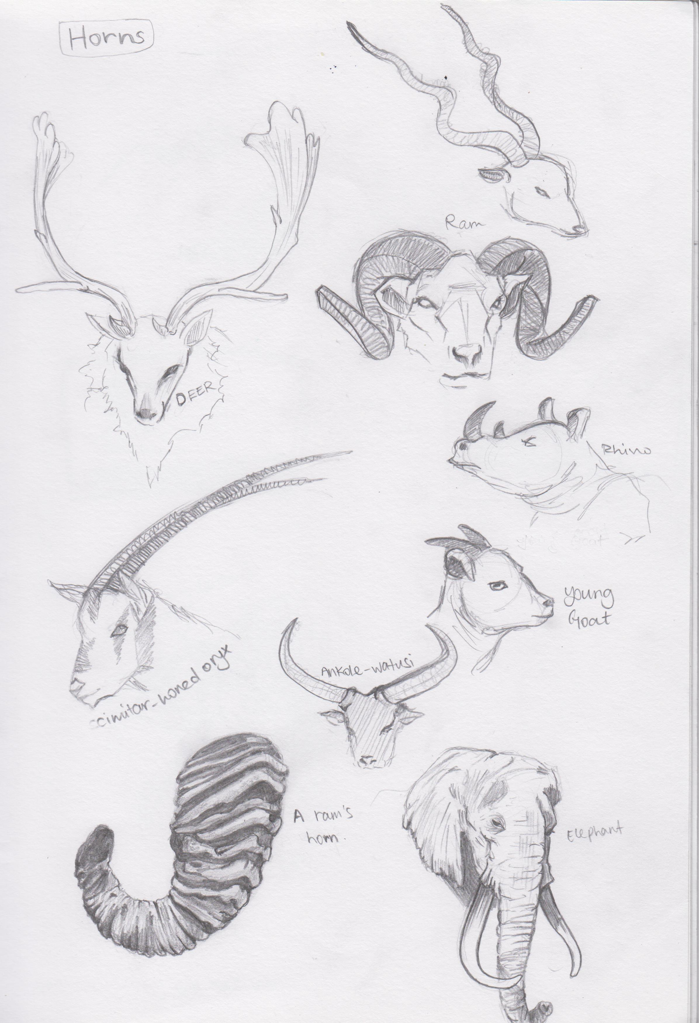 Types Of Horns