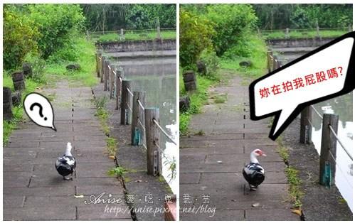 宜農牧場_008.jpg
