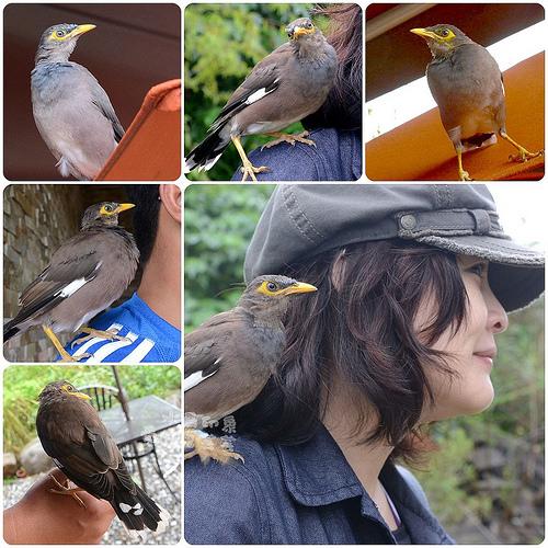 水鳥印象029.jpg