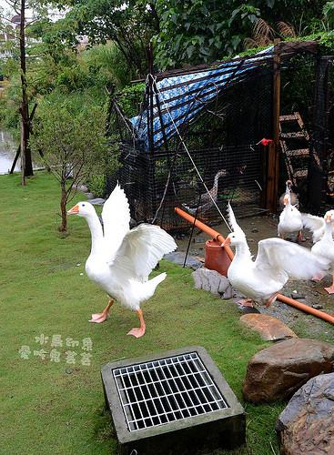 水鳥印象031.jpg