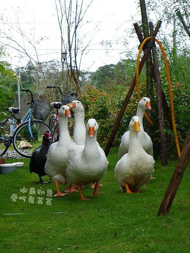 水鳥印象034.jpg