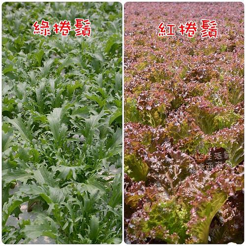 彰化.閃爍西南角土地生活節開跑!(3/29-4/6)