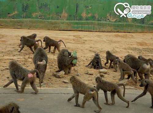 勇闖猛獸島猛獸籠車大體驗@六福莊生態度假旅館 (圖多)