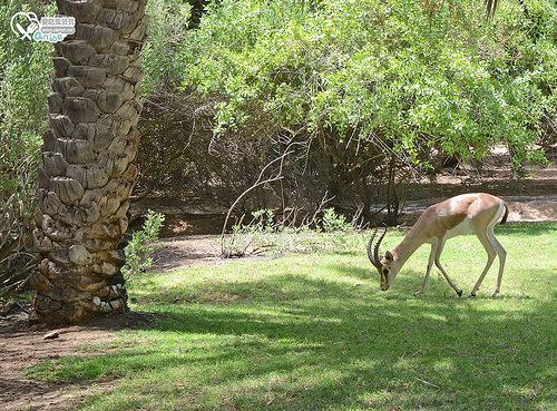 沙漠綠洲渡假村Al Maha Desert Resort & Spa @杜拜小旅行