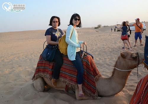 Desert Safari Dubai 沙漠飆沙初體驗@2014杜拜小旅行