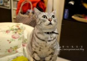 今日熱門文章:再訪小妮家–Nemo跟MiuMiu可愛死了!