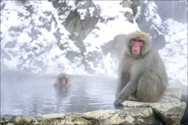 地獄谷野猿公苑雪猴