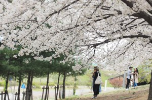 今日熱門文章:首爾櫻花景點 | 石村湖、汝矣島、首爾森林