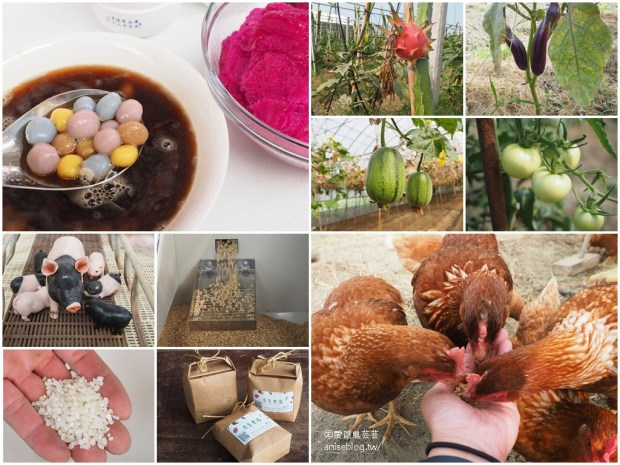 嘉義布袋親子景點 | 崇美農場,農村生態導覽、碾米、食農教育、低碳飲食、彩色湯圓 DIY