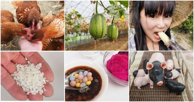 嘉義布袋親子景點 | 崇美農場,農村生態導覽、碾米、食農教育、低碳飲食、彩色湯圓 DIY @愛吃鬼芸芸