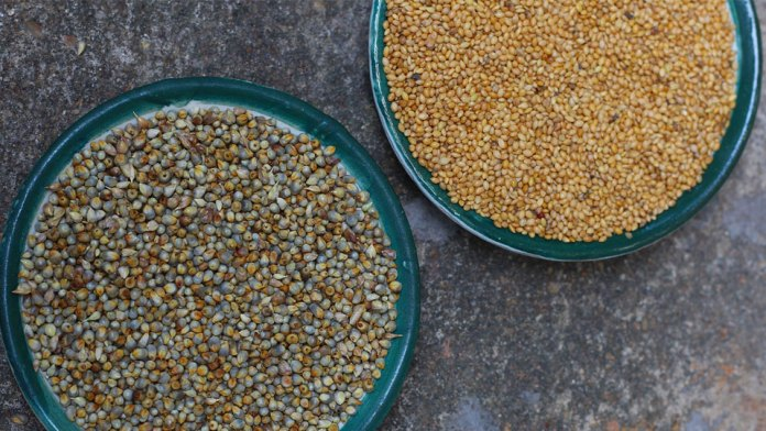 type-of-millets