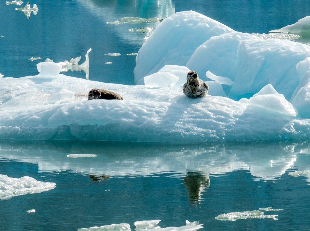 P9113335 - Cruise Diary: The Alaska Small Ship Experience