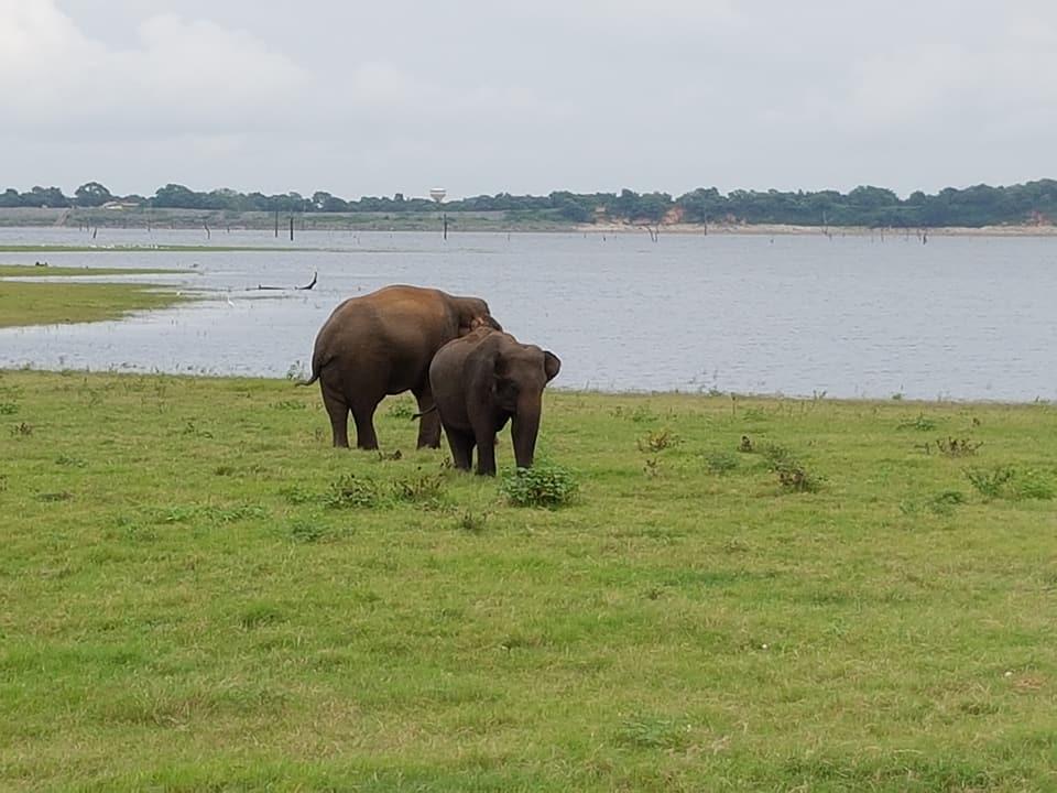 26055799 10156912931333222 8448889117327041727 n - Traveller's Tales | Explore Sri Lanka