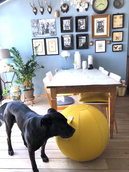 zitbal met hond