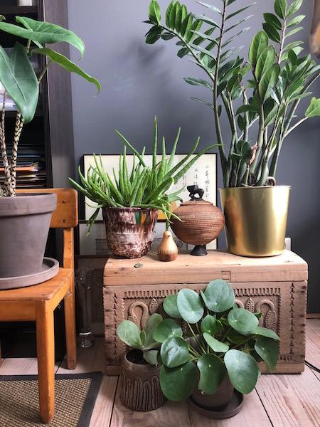 wauw factor planten