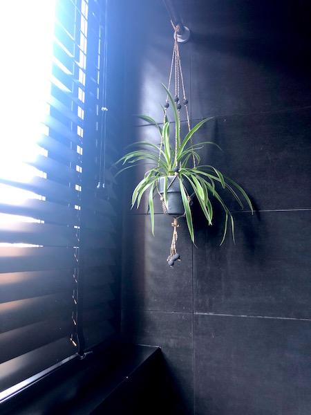 groene badkamer plant