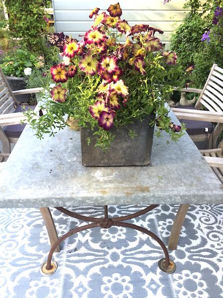 nazomeren met kleur in de tuin