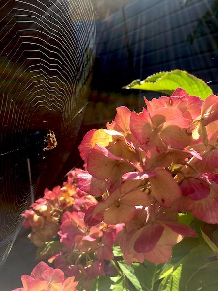 hersttuin spinnenrag