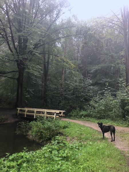 dierendag het Amsterdamse Bos