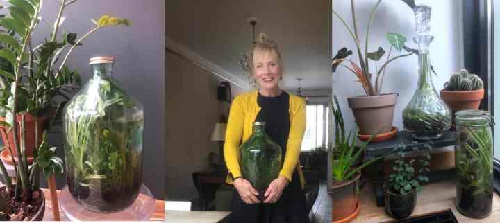 Mijn 'bottle garden' een jaar later