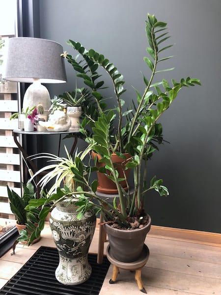 Feng Shui-planten