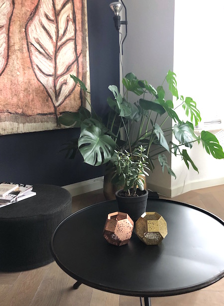 binnenkijken-plant