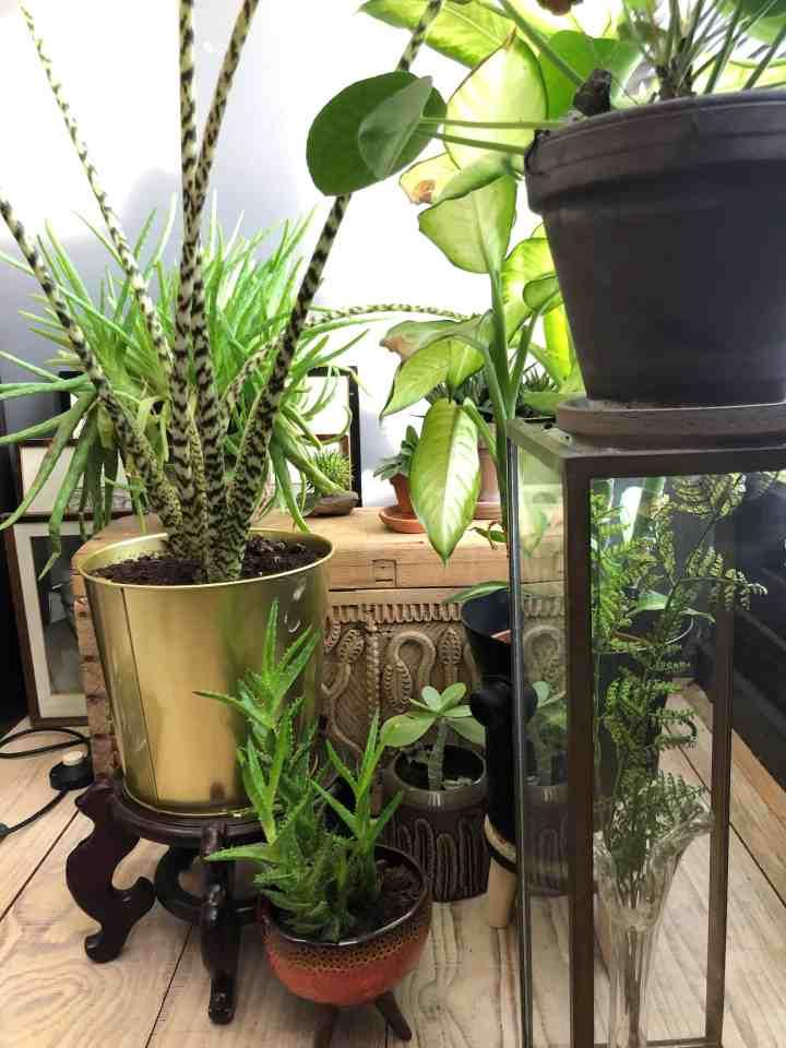 planten voor betere nachtrust