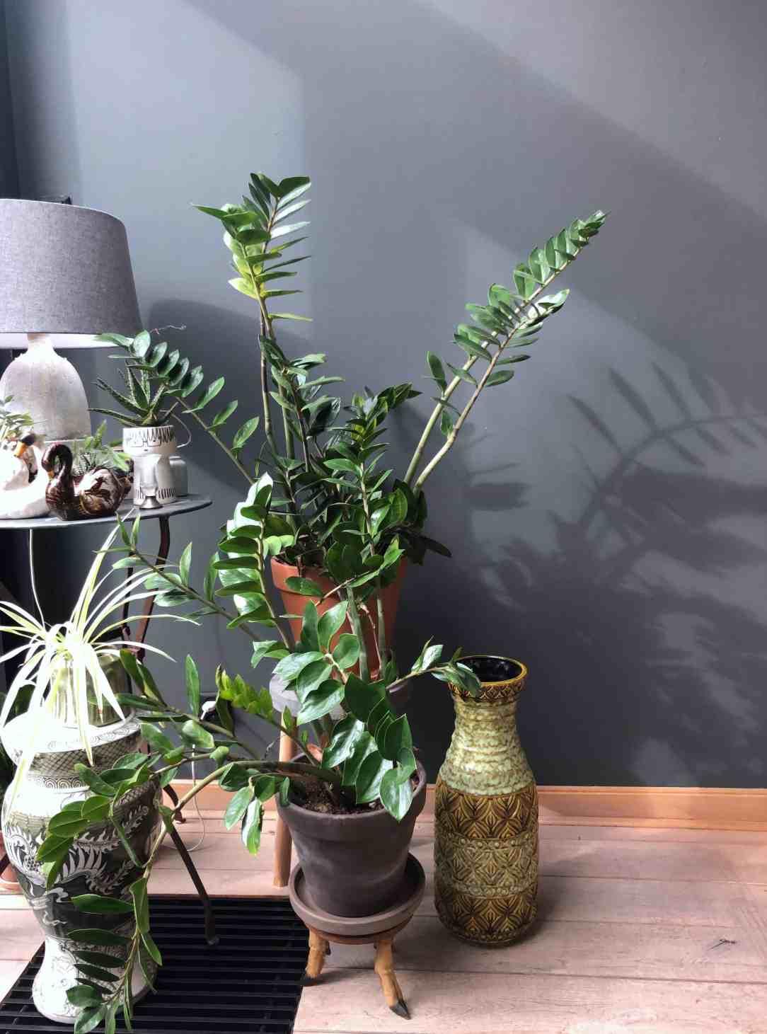 planten in huis-milieuvriendelijk interieur