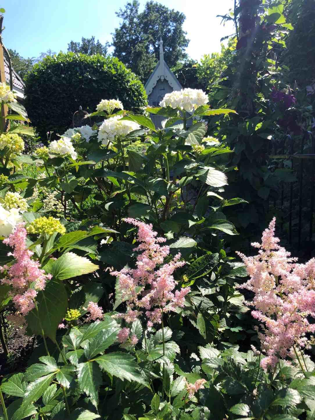 Genieten van mijn tuin-bloemenzee