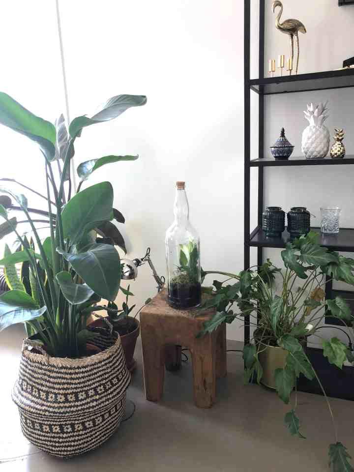 rieten mand met plant