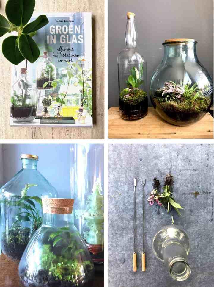 Bottle garden-groen in glas