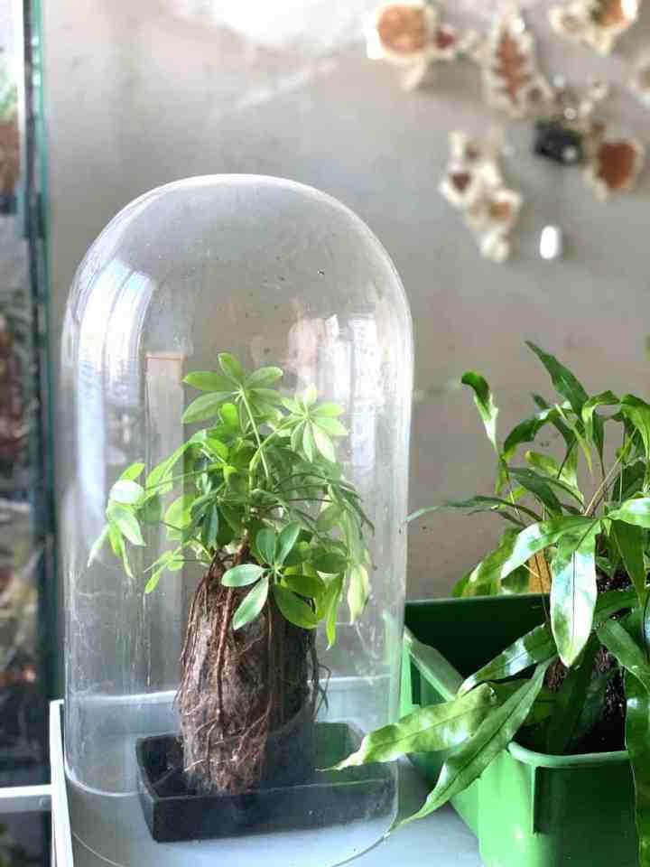 Glazen stolp met plant