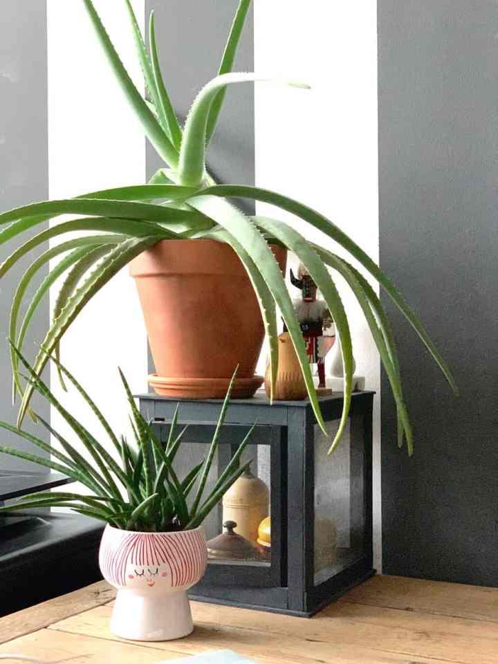 planten waar je geen omnkijken naar hebt