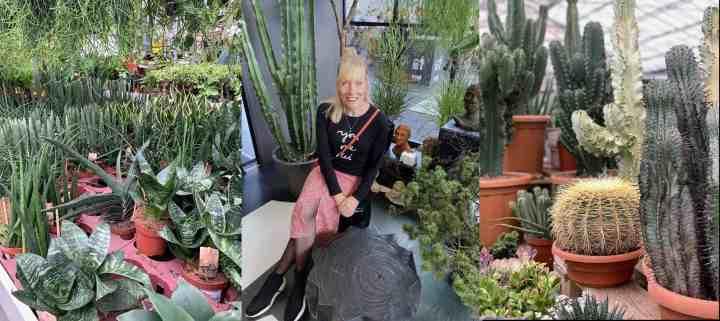 Planten waar je geen (of weinig) omkijken naar hebt