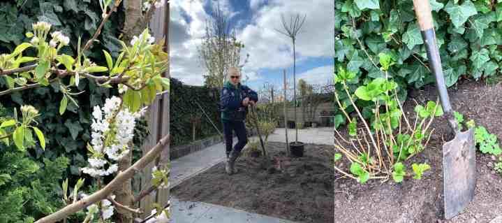 Mijn tuin make-over: de eerste stappen