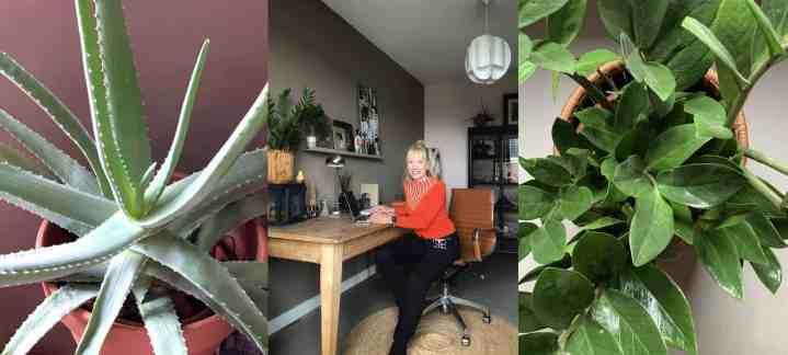 Planten voor een happy thuiswerkplek