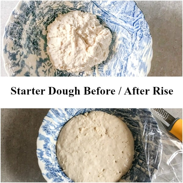 colomba starter dough before and after rise