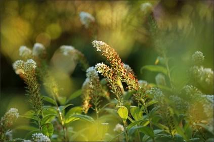 20151002_BF_GardenNow01