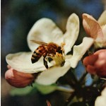 Bees, Permaculture and Blessing