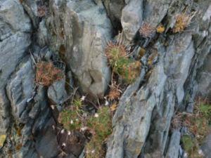 12-alpines