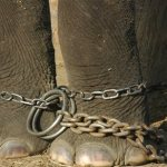 On How Elephants Can Escape Their Chains, and We Can Too