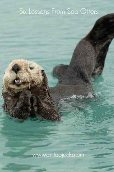 Six important life lessons we can learn from sea otters! #seaotters #nature #photography
