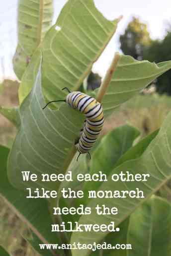 We need each other like the monarch needs the milkweed. We need #community like the #monarch needs #milkweed #fmfparty http://wp.me/p7W1vk-eg