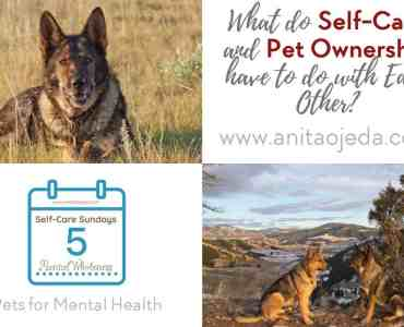 Have you ever wondered if owning a pet is good for you? Who wants to clean up after a pet, train a puppy, or find petsitters? It turns out, that the benefits far outweigh the inconveniences. #pet #cat #dog #balance #selfcare #MentalHealthMonth #4Mind4Body #B4Stage4