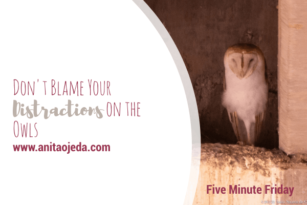 Distractions. We all have them, and we all blame them on something. My phone disaster showed me that I shouldn't blame my distractions on the owls. #distractions #Christian #spiritualhealth #selfcare #salvation #fmfparty #selfawareness