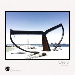 fridayFOTO :: Whale