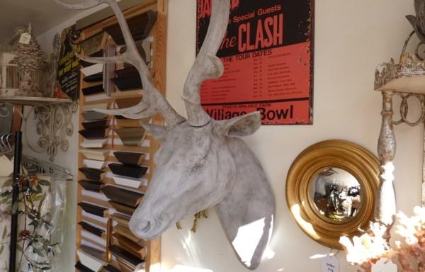 Large grey deer head