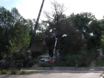 Preparations / white pine removal / photo