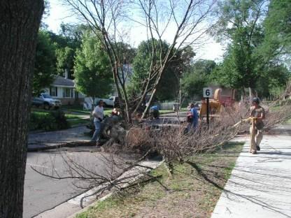 Spirit tree / white pine removal / photo