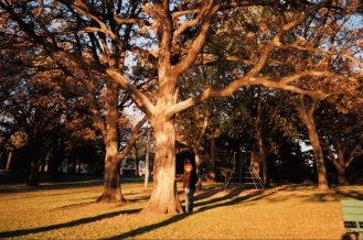 Loon Lake / oak tree / anita / photo